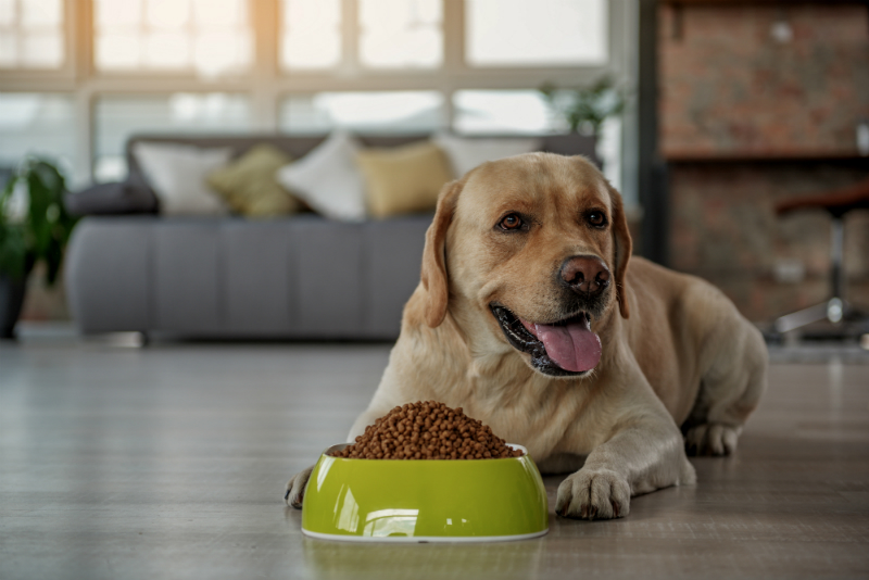 Dog Boarding Services in NYC is a Home Away From Home